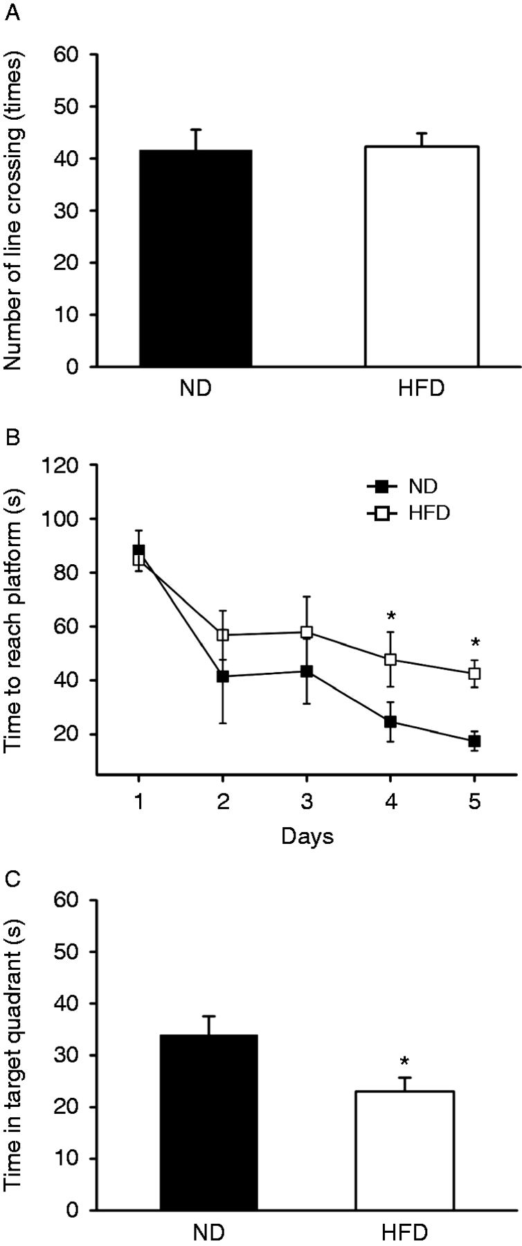 DPP-4 inhibitors improve cognition and brain mitochondrial function