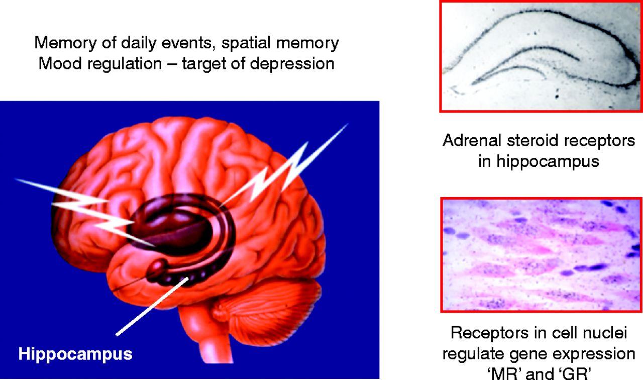 60 YEARS OF NEUROENDOCRINOLOGY: Redefining neuroendocrinology ...