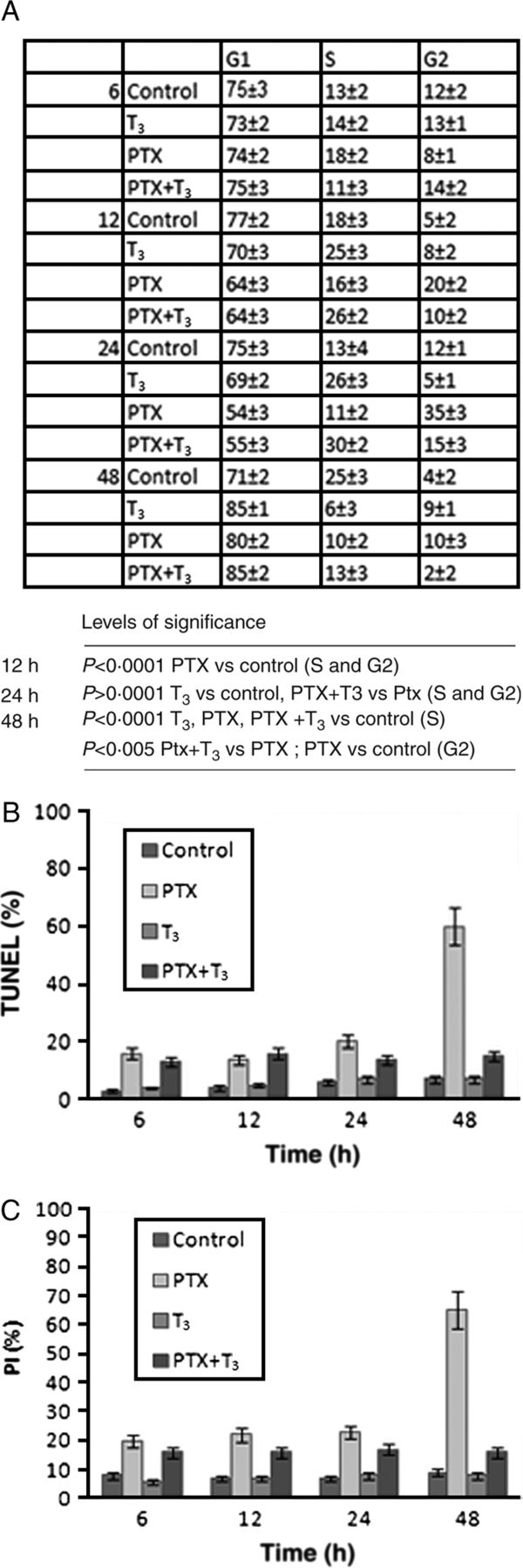 T3 preserves ovarian granulosa cells from chemotherapy-induced