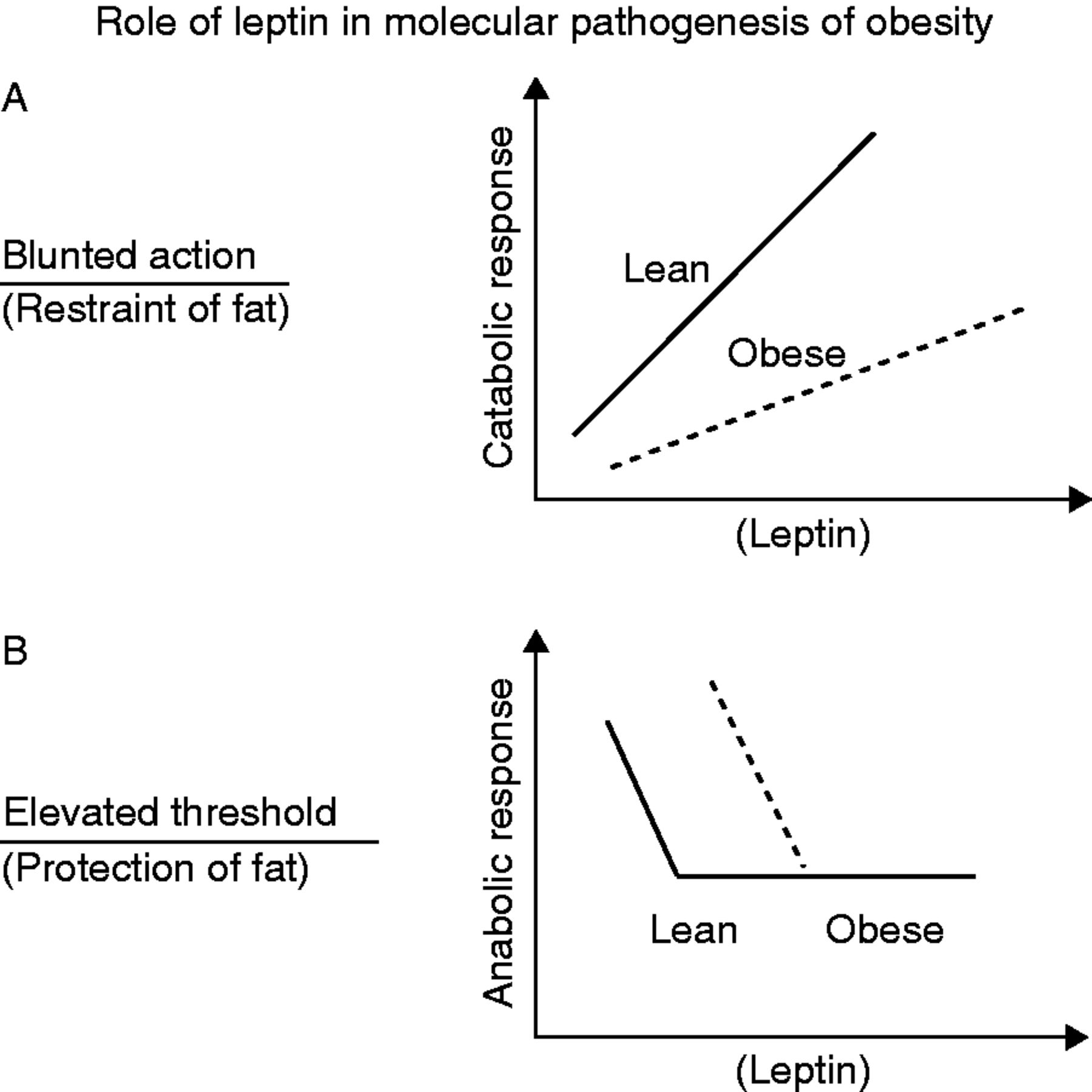 20 YEARS OF LEPTIN: Role of leptin in energy homeostasis in
