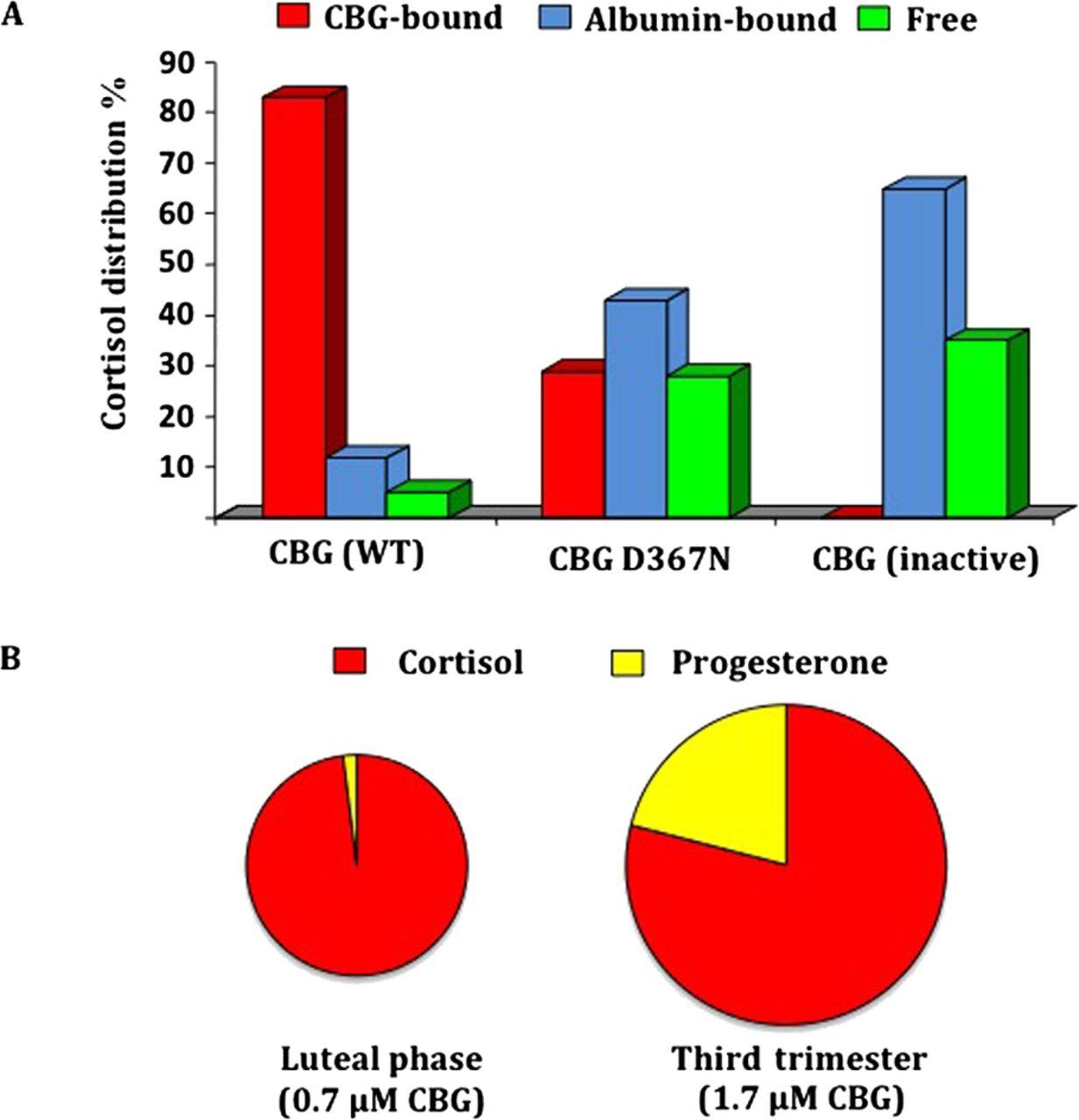Plasma Steroid-binding Proteins: Primary Gatekeepers Of