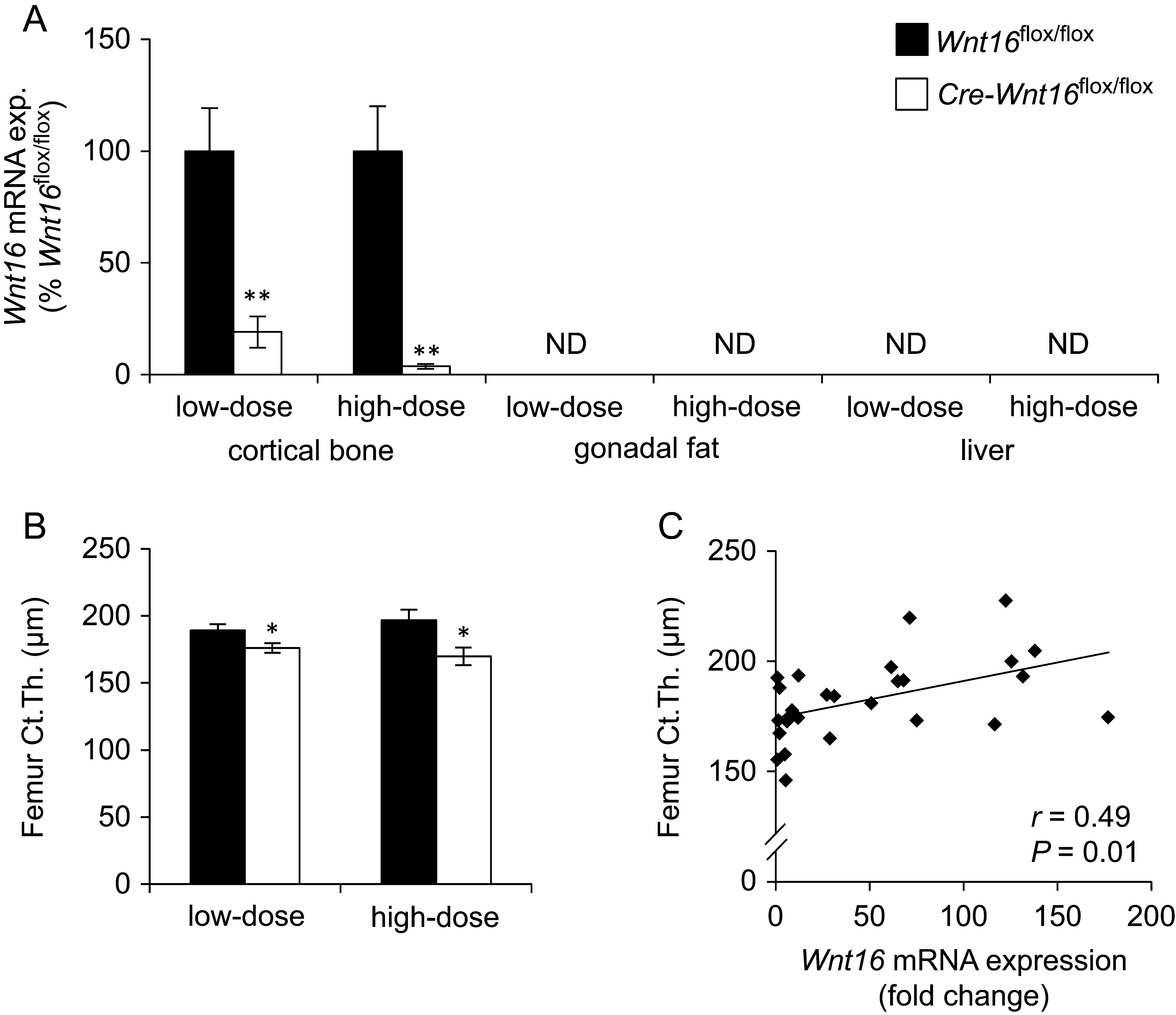 Inducible Wnt16 Inactivation Wnt16 Regulates Cortical Bone