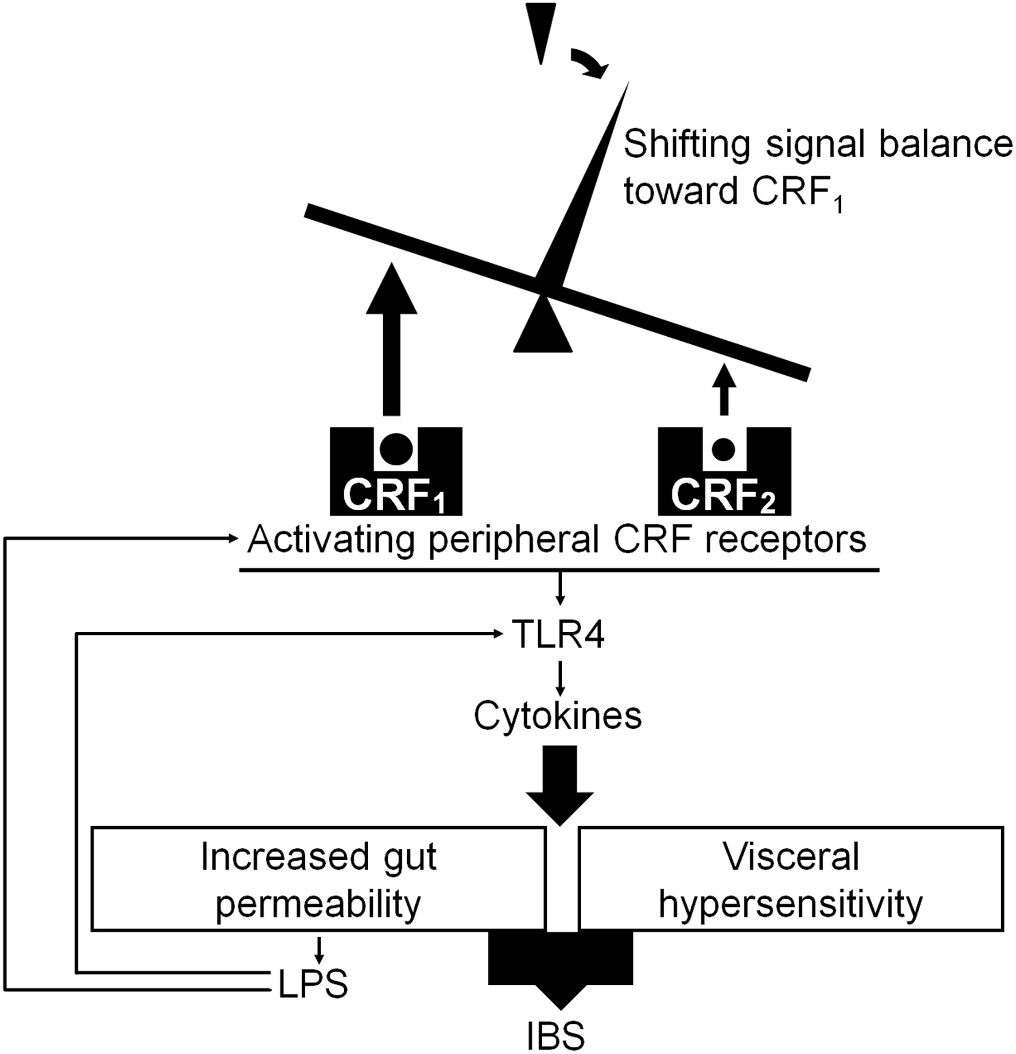 Altered colonic sensory and barrier functions by CRF: roles