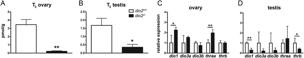 Disruption of deiodinase type 2 in zebrafish disturbs male and
