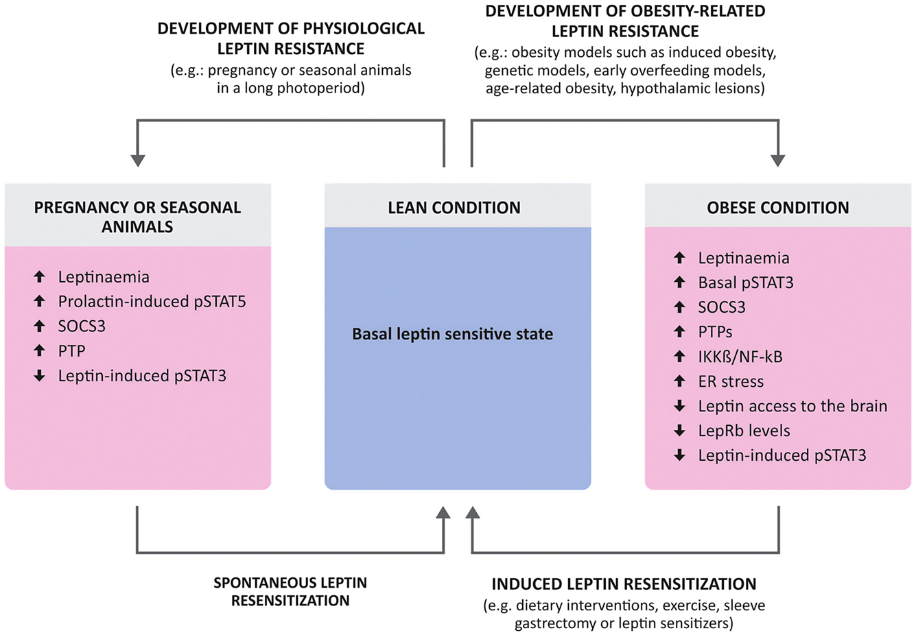 Leptin resensitisation: a reversion of leptin-resistant states in
