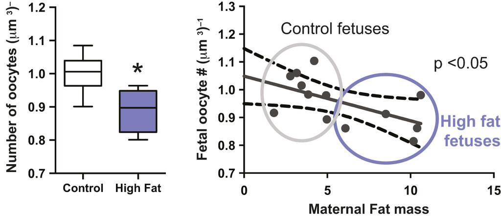 Nutritional adversity, sex and reproduction: 30 years of DOHaD and
