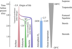 Terpenes, hormones and life: isoprene rule revisited in
